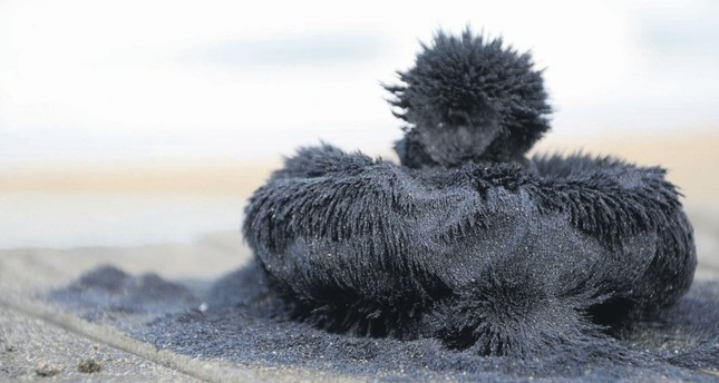 The Black magnetite sand in Ünye, Ordu has been used as an alternative medicine for centuries.