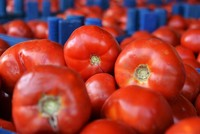Tomatoes may repair lung disease, research reveals