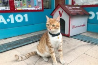 Turkish supermarket chain hires 'bully' cat for Istanbul store