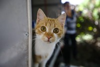 Cats are alright: From old caravan to new home for cats