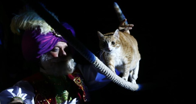 A cat performs at the Moscow Cat Theatre in Moscow on Sept. 22, 2019.