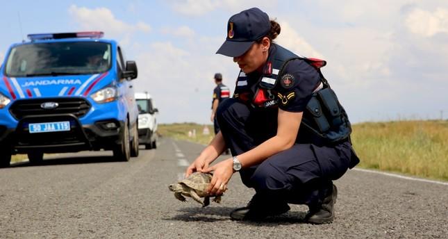 الدرك التركي يسير دوريات خاصة لحماية السلاحف في كبادوكيا