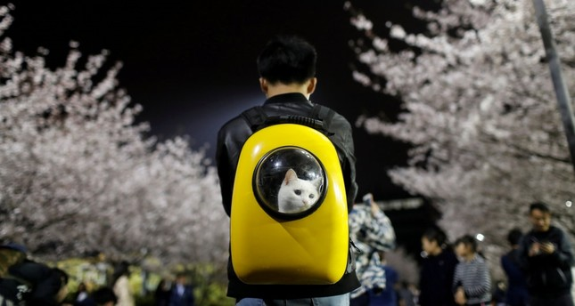China's $25B pet spending draws criticism