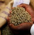 Indonesia, SKorea to open international coffee school