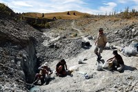 The fossilized remains of a giant burrowing bat that lived millions of years ago have been found in New Zealand, an international team of scientists announced Thursday.  It belonged to