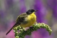 Bird population increases in eastern Turkey's Lake Van