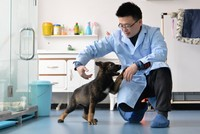 Dubbed 'Sherlock Holmes', China's first ever cloned police dog starts training