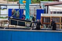 В России выпустили в море часть косаток и белух из «китовой тюрьмы»