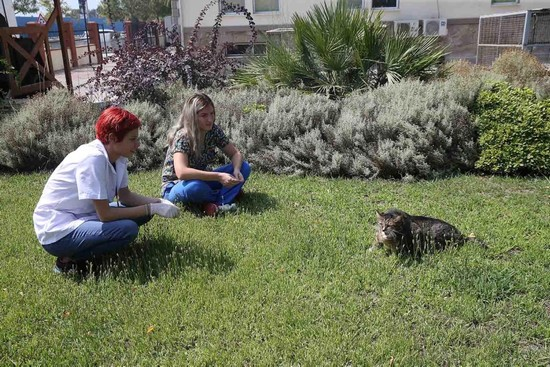 Obese stray cat Taci begins losing weight after starting diet