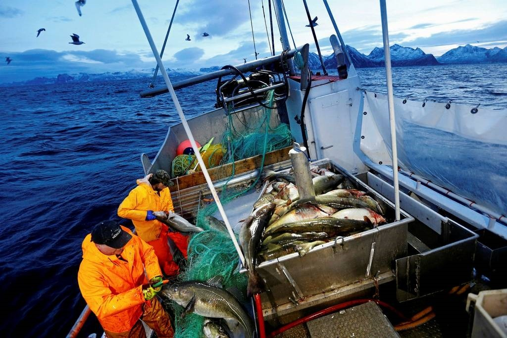 This is a Jan 1, 2016 file photo of Gunnar Johansen, left, and Trond Dalgard fish for cod in the Norwegian Sea near Gryllefjord, northern Norway. (AP Photo)