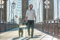 John Wick: Chapter Two  The sequel of 2014's most successful action film,