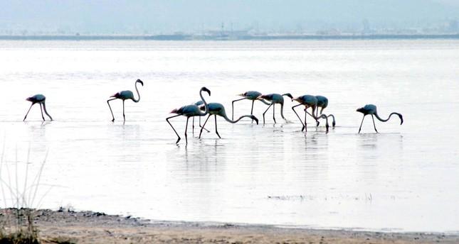 طيور الفلامينغو في البحيرة (الأناضول)