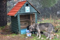 Strays benefit from 'zero waste' movement, have a roof over their heads