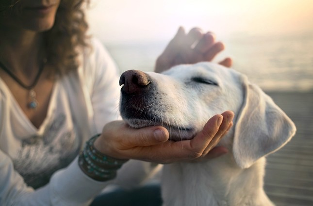If the dog owner walks an aggressive dog without a leash, he or she is legally responsible for the danger it creates. (iStock Photo)