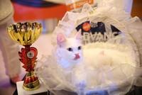 Puffy Turkish Angora wins int'l cat beauty contest