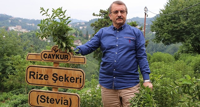 Çaykur General Manager Imdat Sütlüoğlu stands next to a sign that says Rize Sugar in Turkish, Rize, Turkey, July 24, 2017. (IHA Photo)