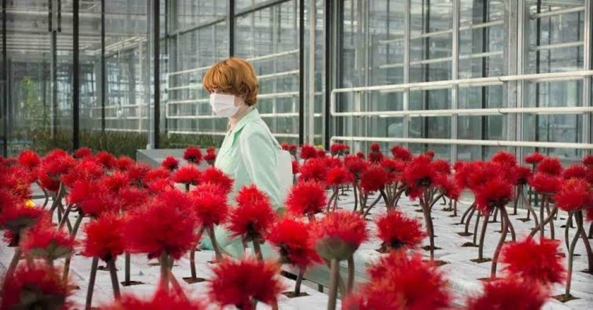 Emily Beecham as Alice Woodard in the greenhouse with her flowers.