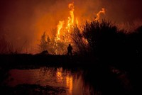 Portugal wird vier Monate nach den besonders verheerenden Waldbränden erneut von einer Feuersbrunst heimgesucht. Mindestens 31 Menschen kamen bei Bränden in mehreren mittelportugiesischen Bezirken...