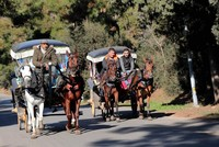 Protest over Istanbul's horse carriages continues