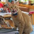 Classroom pet Tombi the Cat inspires book series for children