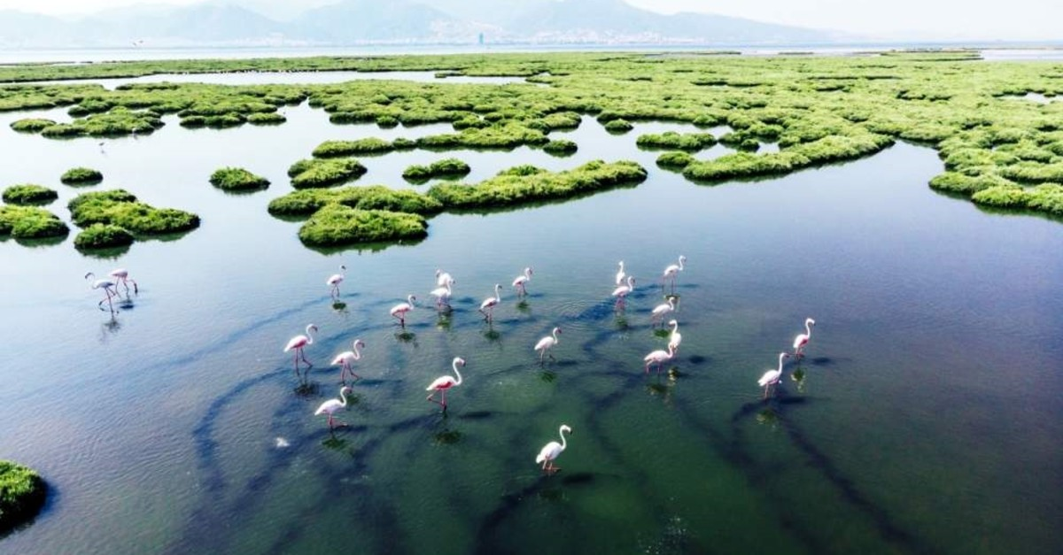 The wetlands of Tuzla and Gediz in western Turkey, for example, are one of the most important habitats for migratory birds, especially flamingos. (iStock Photo)