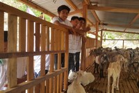 Filipino Muslims taught to fish, breed livestock by Turkey's TİKA