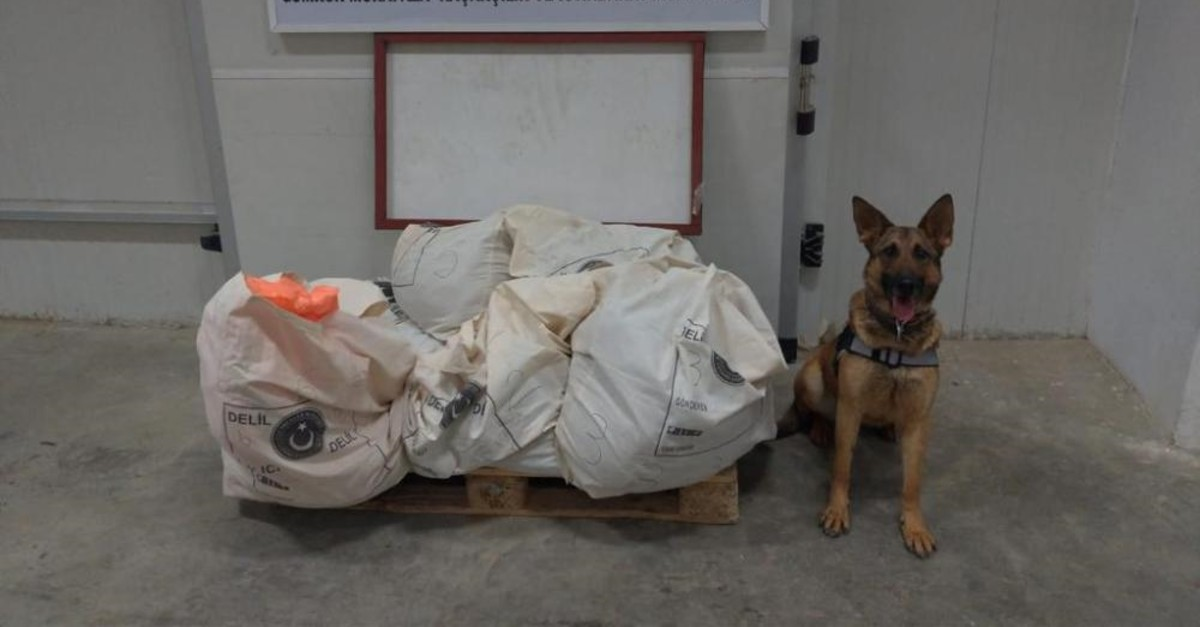 A sniffer dog poses with explosives it helped seize.