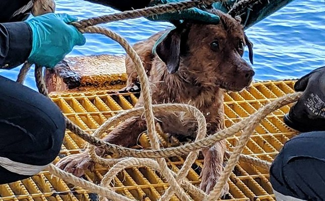 This handout from Vitisak Payalaw taken on April 12, 2019 and released to AFP on April 16, 2019 shows Boonrod the dog after he was rescued by workers on an oil rig off the coast of the Gulf of Thailand. (AFP Photo)