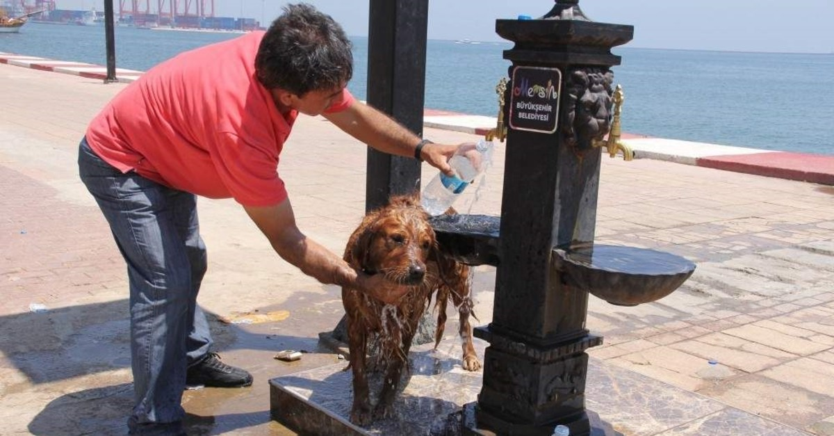 A man showers his dog to protect from extreme heat in Mersin, Turkey. (?HA Photo)