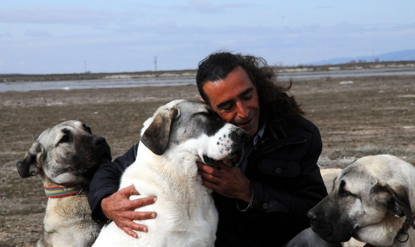 Dog breeds indigenous to Turkey