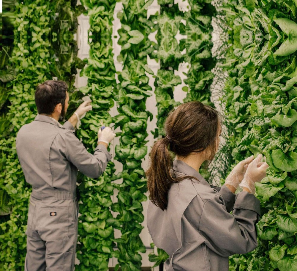 Ain't no sunshine on these farms: Why vertical gardens could be the future of food production