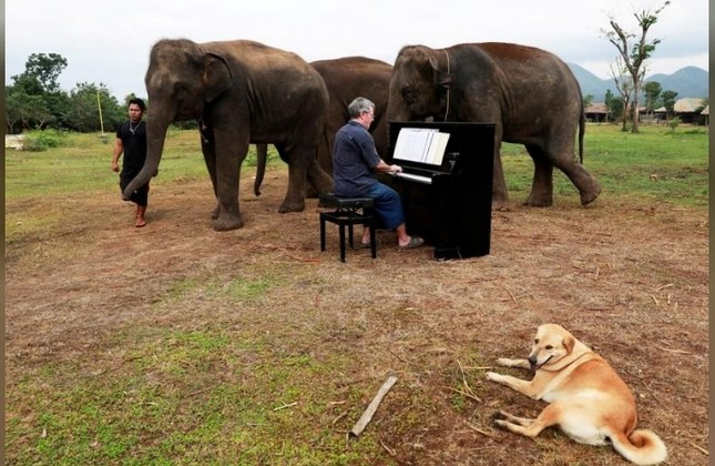 Classical piano soothes old elephants at Thai sanctuary