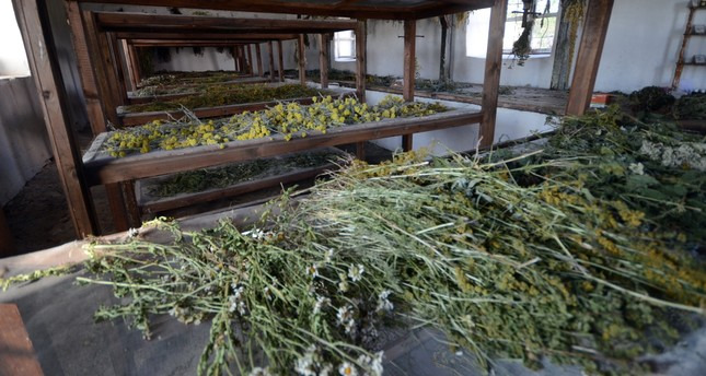 Kars mountains rich in medical plants