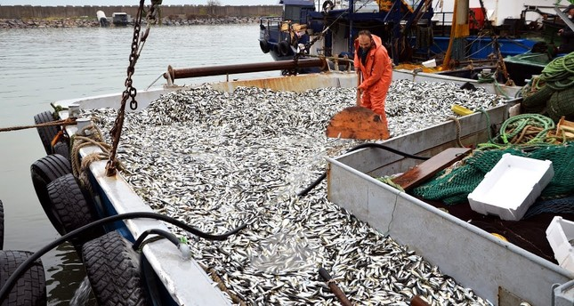 Turkey's aquaculture exports up 13 percent, hit $958M in 2018