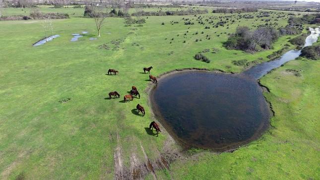 Das Kızılırmak-Delta im Frühling