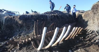 pIn einem Nationalpark auf den a name=__DdeLink__99_2063415727Kommandeurinseln/a in der Region Kamtschatka wurde ein fünf Meter langes Skelett einer Stellers Seekuh entdeckt. Dies gab am Freitag...