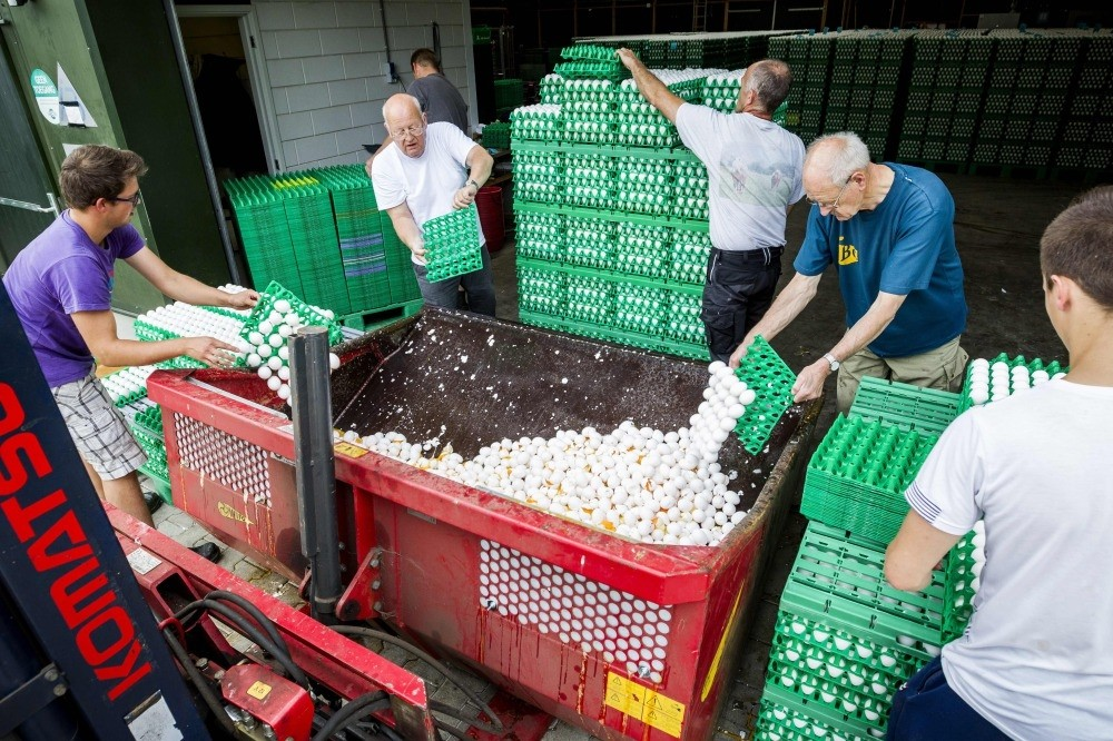 Farmers throw out eggs at a poultry farm in Onstwedde, Netherlands after the Dutch Food and Welfare Authority (NVWA)found they were contaminated with fipronil, a toxic insecticide outlawed for use in the production of food.