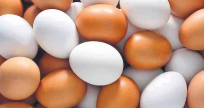 pJapanese researchers have genetically engineered hens whose eggs contain drugs that can fight serious diseases, including cancer, in a bid to dramatically reduce the cost of treatment, a report...