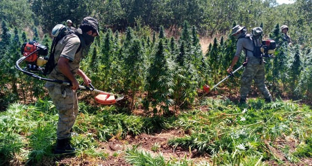 Soldiers destroy cannabis plants found in a field in Diyarbakır, July 31, 2019.