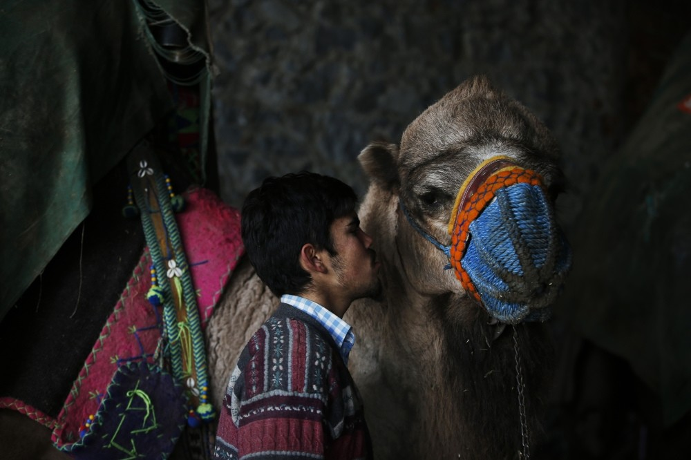 A camel breeder gives a last kiss to his camel before the fight starts in Selu00e7uk, u0130zmir, Jan. 20.