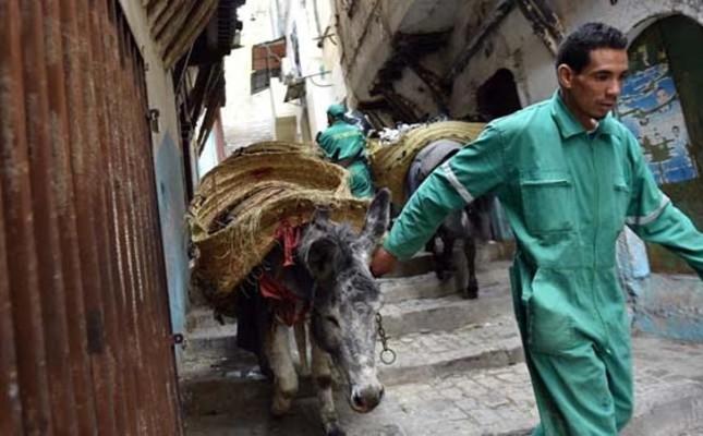 Donkeys at dawn: A rubbish job in Algiers' Kasbah