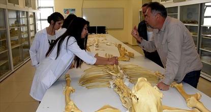 علماء يكتشفون مستحاثات لحيوانات فقارية وسط تركيا عمرها 8 ملايين عام