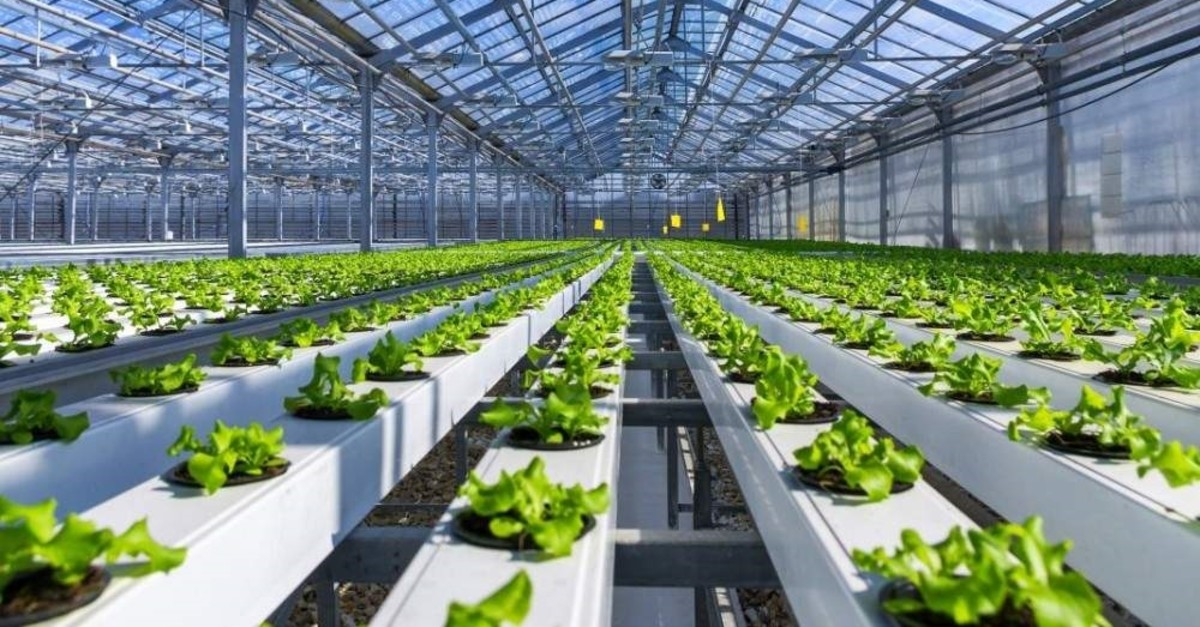 MAIN ARTICLE - ForFarming enables people to grow fresh, healthy and pesticide-free food no matter the season.