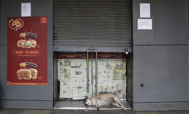 A stray dog sleeps at the entrance to a partially closed McDonald's outlet in New Delhi, India, Tuesday, Aug. 22, 2017. (AP Photo)