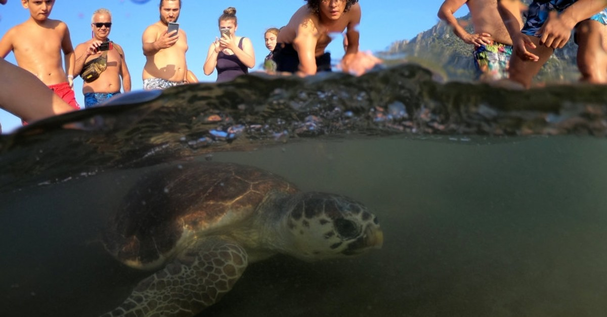 A loggerhead swims back to the sea following her release after treatment at the sea turtle rescue center at u0130ztuzu Beach in Dalyan, Muu011fla.