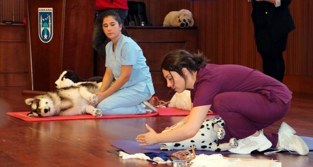 Ankara residents trained in pet first aid