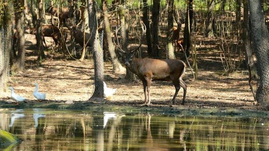 Wildlife in Kocaeli's Ormanya is very rich for a forest inside the city. (AA Photo)