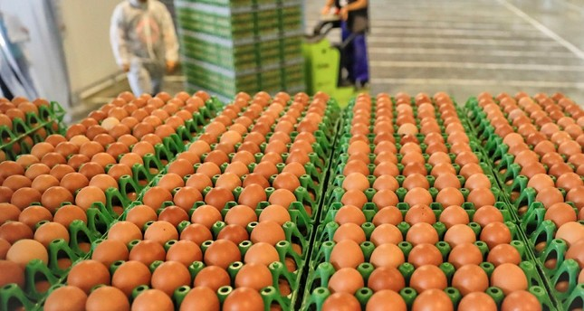 Egg contamination scandal spreads to Italy