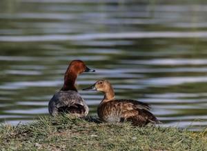 Озеро Ван на востоке Турции стало домом для более 200 видов птиц