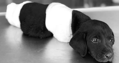 Puppy dies after four feet cut off in NW Turkey